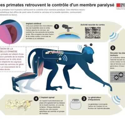 bsi_infographic_epfl_fr